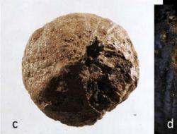 В Швеции нашли лук возрастом 1500 лет