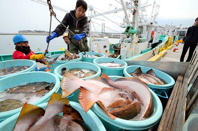 Россия разрешила импорт рыбы с Фукусимы