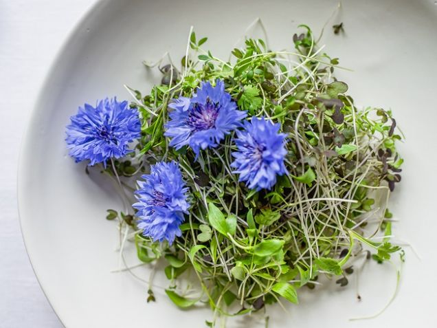 Микрозелень для макропользы: что нужно знать