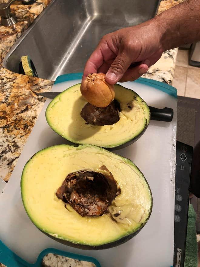 Семья на Гавайях вырастила самый большой авокадо в мире