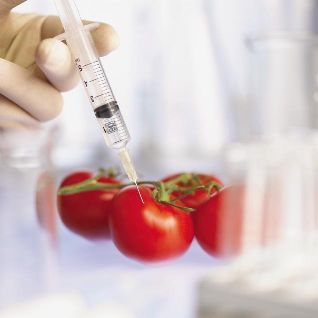Россия прекращает производство продуктов с ГМО