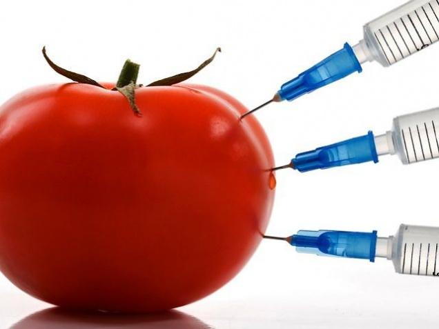 Некоторые страны ЕС смогут запрещать импорт ГМО