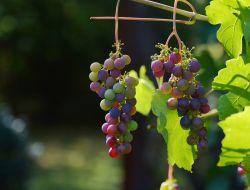 В России предложили ввести сбор на импортное вино