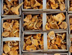 Холодное лето сдвинуло грибной сезон на месяц