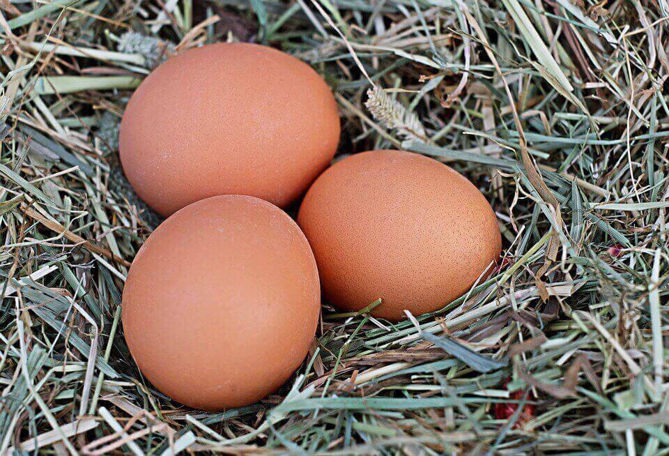 Японцам впервые удалось создать гипоаллергенные яйца