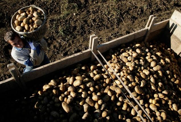 Сокращенные чиновники будут работать в сельском хозяйстве