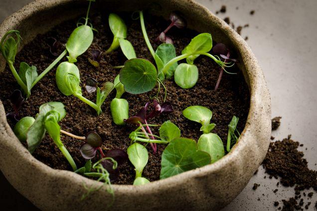 Корни и травы. Сливки, кофе, бородинский хлеб