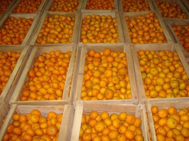 Россельхознадзор вернул Казахстану более 20 тонн мандаринов