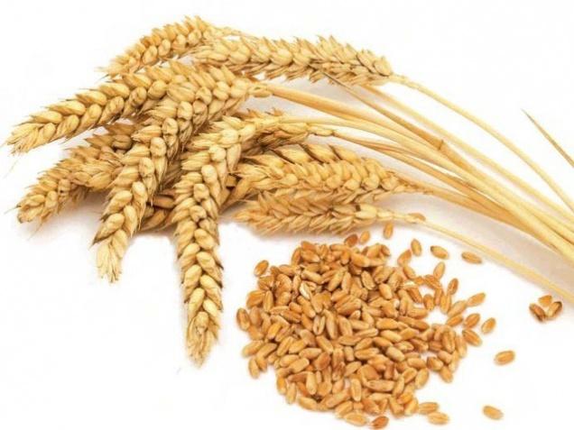 Экспортную пошлину на пшеницу отменили