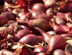 Россия разрешила импорт турецких овощей