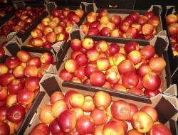 Россельхознадзор вернул Белоруссии свыше 137 тонн фруктов
