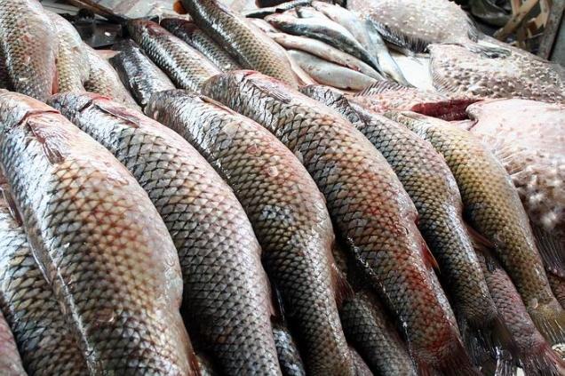 Росрыболовство введет экспортные пошлины на рыбу