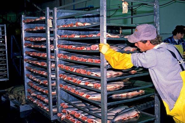 К 2020 году Россия увеличит производство рыбы вдвое