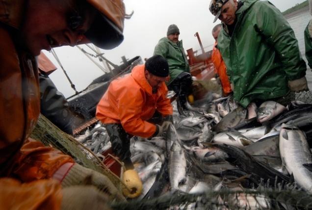 Росрыболовство не будет вводить эмбарго на экспорт рыбы