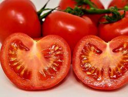 Россия полностью разрешила импорт томатов из Турции