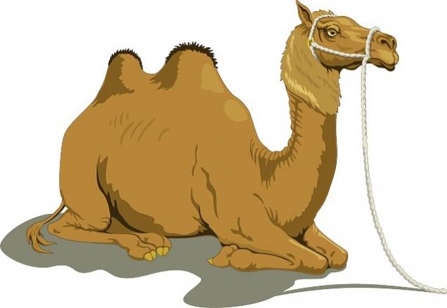 На российских прилавках может появиться верблюжье молоко