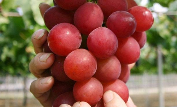 В Японии продали виноград за 1 млн иен