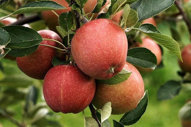 Цены на яблоки подскочили в 2 раза