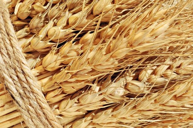 Экспортные пошлины на пшеницу могут обнулить